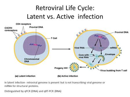 In latent infection- retroviral genome is present but is not transcribing viral genome or mRNA for structural proteins. Distinguished by qPCR (DNA) and.