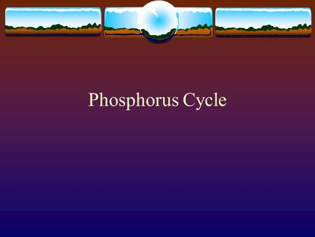 Phosphorus Cycle. Phosphorus  P is a vital nutrient necessary for plants and animals.  It is the building block of important parts of the body such.