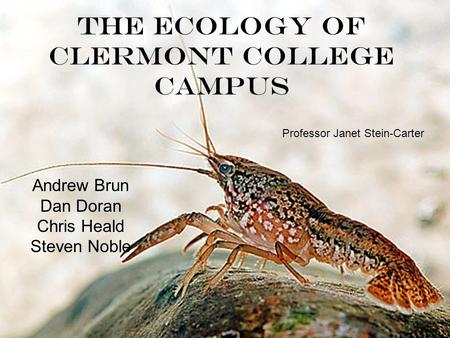 The Ecology of Clermont College Campus Andrew Brun Dan Doran Chris Heald Steven Noble Professor Janet Stein-Carter.