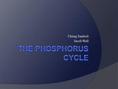 Chirag Tamboli Jacob Wall. What is Phosphorous and Why do We need it  Phosphorus is a chemical element with symbol P and atomic number 15.  It is an.
