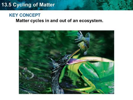 13.5 Cycling of Matter KEY CONCEPT Matter cycles in and out of an ecosystem.