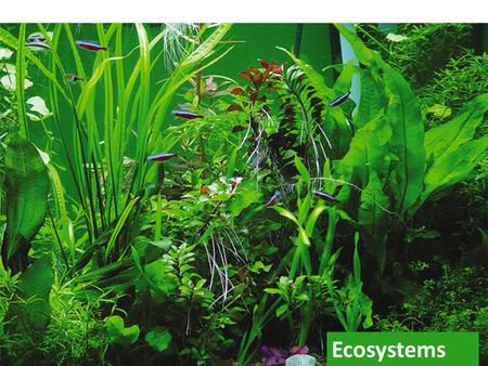 Ecosystems biosphere Ecosystem inputs constant input of energy energy flows through nutrients cycle nutrients can only cycle inputs  energy  nutrients.