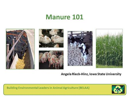 Building Environmental Leaders in Animal Agriculture (BELAA) Manure 101 Angela Rieck-Hinz, Iowa State University.