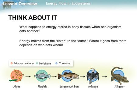 Lesson Overview Lesson Overview Energy Flow in Ecosystems THINK ABOUT IT What happens to energy stored in body tissues when one organism eats another?