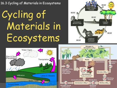 16.3 Cycling of Materials in Ecosystems