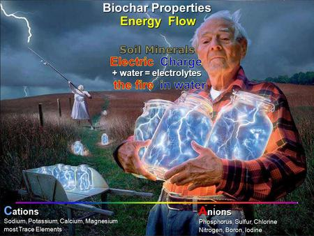 PHOTO: Bob Cirino, University of Delaware into chlorophyllcarbohydratesphotosynthesis + water = electrolytes Nitrogen, Boron, Iodine Phosphorus, Sulfur,