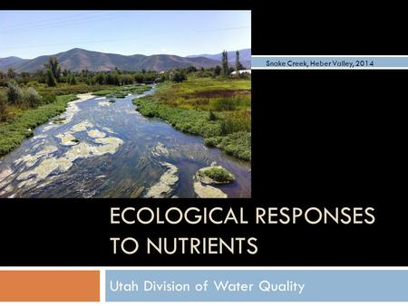ECOLOGICAL RESPONSES TO NUTRIENTS Utah Division of Water Quality Snake Creek, Heber Valley, 2014.