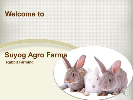 Suyog Agro Farms Rabbit Farming Welcome to How to Create Wealth EMPLOYEES SELF EMPLOYED BUSINESS OWNER INVESTORS Create Wealth Through Rabbit Farming.