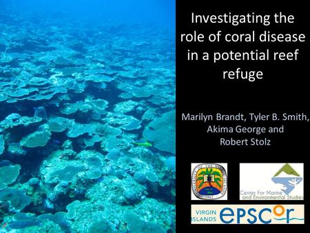 Marilyn Brandt, Tyler B. Smith, Akima George and Robert Stolz Investigating the role of coral disease in a potential reef refuge.