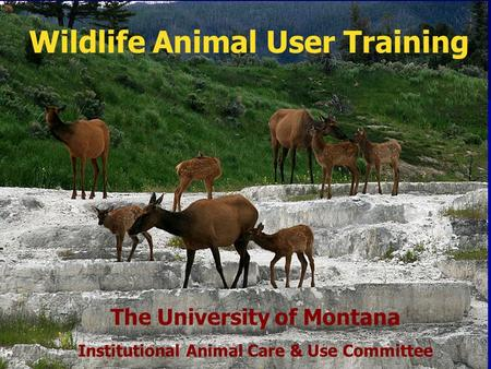 Wildlife Animal User Training The University of Montana Institutional Animal Care & Use Committee.