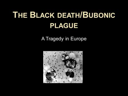 T HE B LACK DEATH /B UBONIC PLAGUE A Tragedy in Europe.