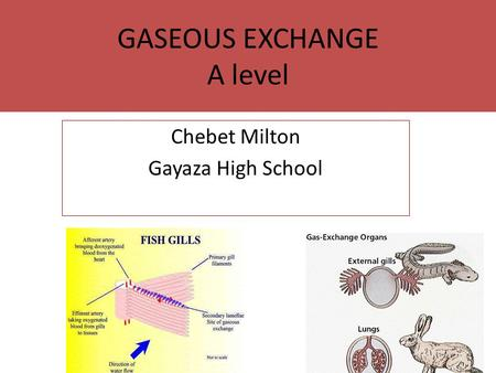GASEOUS EXCHANGE A level