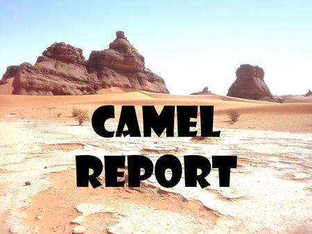 Camel report. Walk slowly to the cart in a single file line.