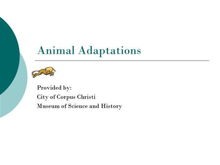 Animal Adaptations Provided by: City of Corpus Christi Museum of Science and History.