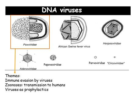 Themes: Immune evasion by viruses Zoonoses: transmission to humans