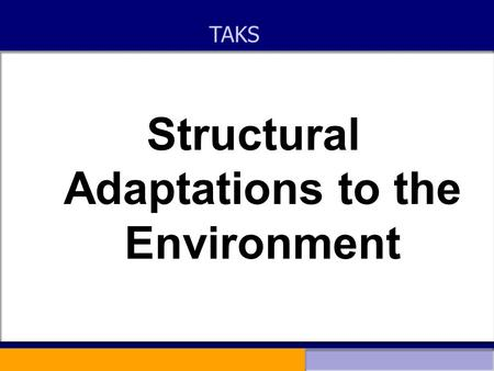 Structural Adaptations to the Environment TAKS. Structural adaptations to the environment Every species is uniquely adapted to its environment This ensures.