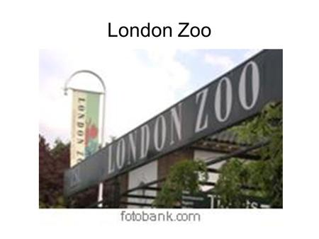 London Zoo. London has a very fine old Zoo, which many children with their parents and friends visit every day.