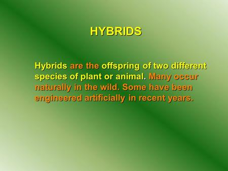 HYBRIDS Hybrids are the offspring of two different species of plant or animal. Many occur naturally in the wild. Some have been engineered artificially.