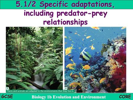 5.1/2 Specific adaptations, including predator-prey relationships