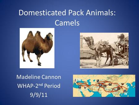 Domesticated Pack Animals: Camels Madeline Cannon WHAP-2 nd Period 9/9/11.