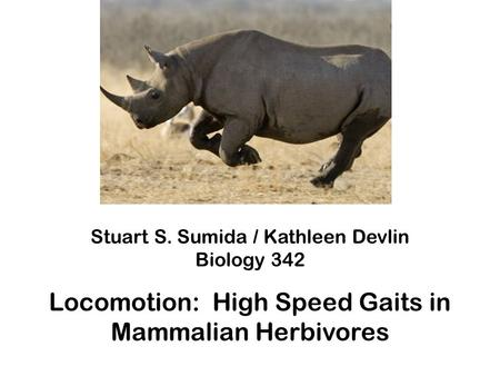 Stuart S. Sumida / Kathleen Devlin Biology 342 Locomotion: High Speed Gaits in Mammalian Herbivores.