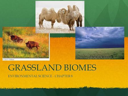 GRASSLAND BIOMES ENVIRONMENTAL SCIENCE - CHAPTER 8.