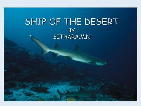 SHIP OF THE DESERT BY SITHARA.M.N There are Different regions on the earth.