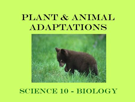 Plant & Animal Adaptations Science 10 - Biology. When you think of a camel, what sort of environment do you picture it in? Desert ???