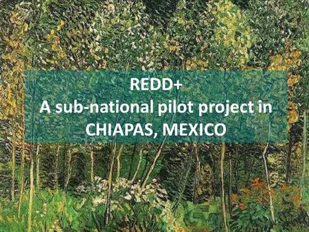 REDD+ A sub-national pilot project in CHIAPAS, MEXICO.