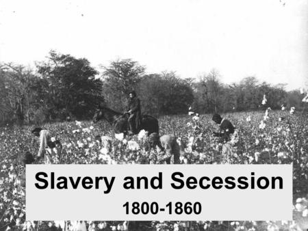 Slavery and Secession 1800-1860. Slavery in the North –Though legal, slavery was largely unnecessary in the North. –By 1804, all Northern states had outlawed.