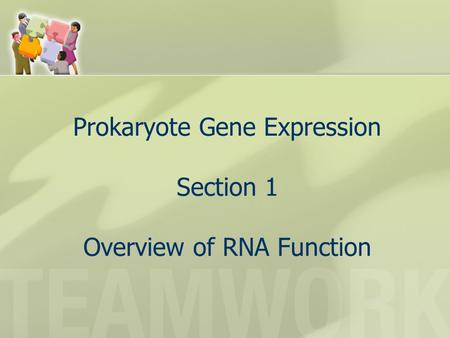 Prokaryote Gene Expression Section 1 Overview of RNA Function.
