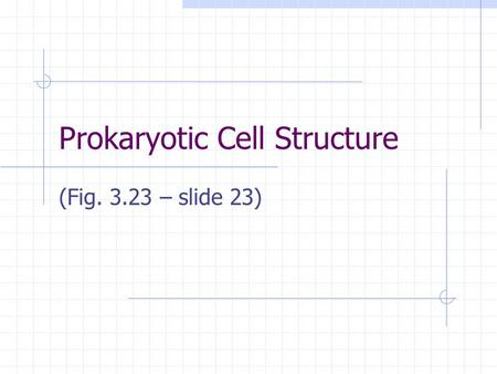 Prokaryotic Cell Structure (Fig. 3.23 – slide 23).