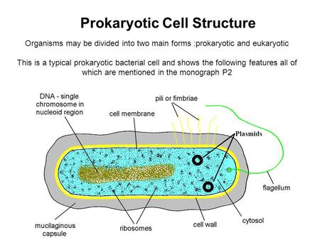 Organisms may be divided into two main forms :prokaryotic and eukaryotic This is a typical prokaryotic bacterial cell and shows the following features.