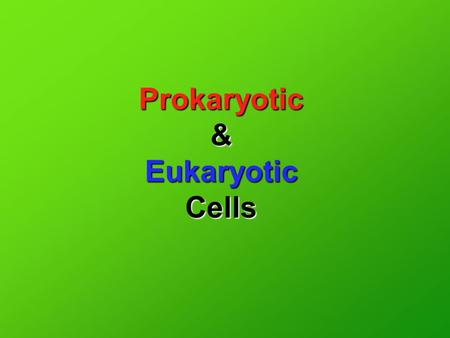 Prokaryotic & Eukaryotic Cells. In your notes, set up a chart that looks like this… Prokaryotic Eukaryotic.