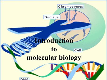 Introduction to molecular biology. Subjects overview Investigate how cells organize their DNA within the cell nucleus, and replicate it during cell division.