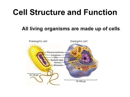 Cell Structure and Function All living organisms are made up of cells.