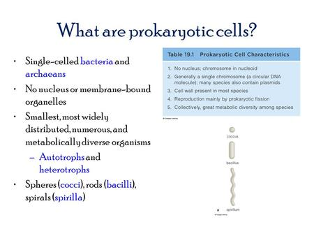 What are prokaryotic cells? Single-celled bacteria and archaeans No nucleus or membrane-bound organelles Smallest, most widely distributed, numerous, and.