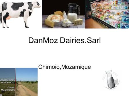 DanMoz Dairies.Sarl Chimoio,Mozamique. Company BackGround & Future Located in Chimoio,Mozambique. Factory located on 250 Ha farm. 2000 start Milk production.