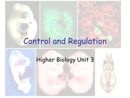 Control and Regulation Higher Biology Unit 3. Growth and development Growth patterns in plants and <strong>animals</strong> Growth is the irreversible increase in the.