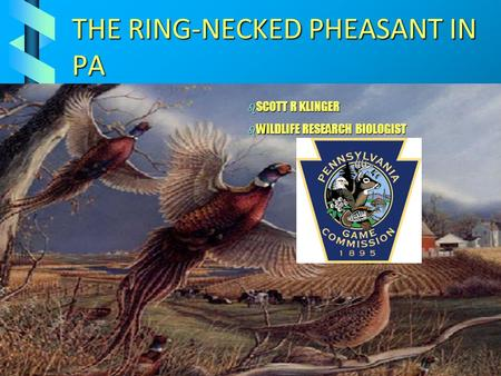 THE RING-NECKED PHEASANT IN PA b SCOTT R KLINGER b WILDLIFE RESEARCH BIOLOGIST.