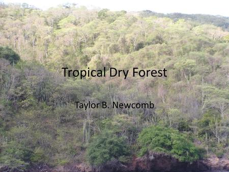 Tropical Dry Forest Taylor B. Newcomb. Location Parts of Africa, South and Central America, Mexico, India, Australia, and tropical islands.