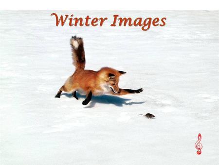 Winter Images Winter Images Chasing a Snack, Red Fox.