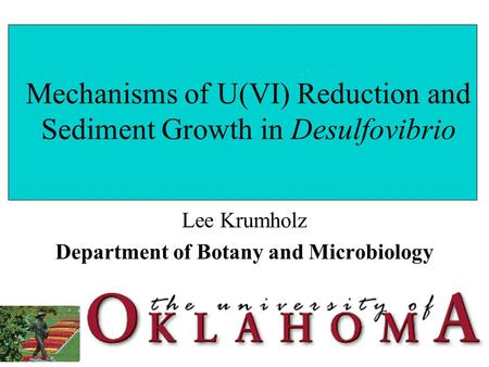 Mechanisms of U(VI) Reduction and Sediment Growth in Desulfovibrio Lee Krumholz Department of Botany and Microbiology.