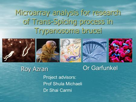 Microarray analysis for research of Trans-Spicing process in Trypanosoma brucei Roy Azran Or Garfunkel Project advisors: Prof Shula Michaeli Dr Shai Carmi.