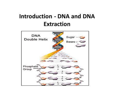 Introduction - DNA and DNA Extraction. Every gene has a promoter, a coding region, and a termination sequence. Genetic engineering is the directed addition.