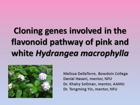 Cloning genes involved in the flavonoid pathway of pink and white Hydrangea macrophylla Melissa DellaTorre, Bowdoin College Danial Hasani, mentor, NFU.
