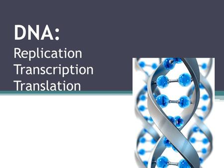 DNA: Replication Transcription Translation