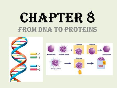 Chapter 8 From DNA to Proteins.