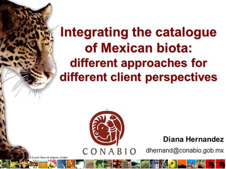Diana Hernandez Integrating the catalogue of Mexican biota: different approaches for different client perspectives.