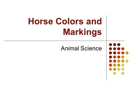 Horse Colors and Markings